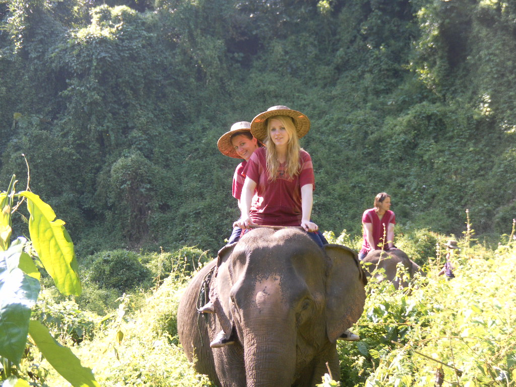 Elephant In Chiang Mai, Thailand wallpaper