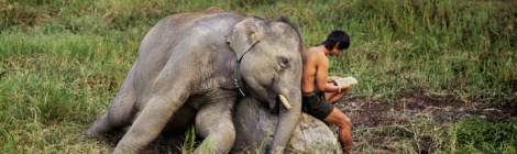 Thai-Mahout-with-Elephant
