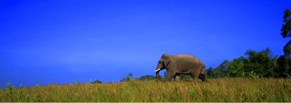 elephant_trek