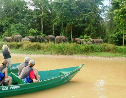 elephant_adventure_borneo