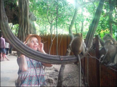 thailand_monkey